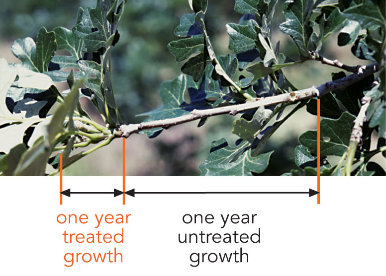Treated growth vs untreated growth